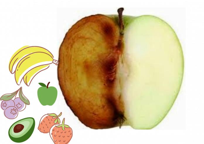 Conservar frutas cortadas na lancheira