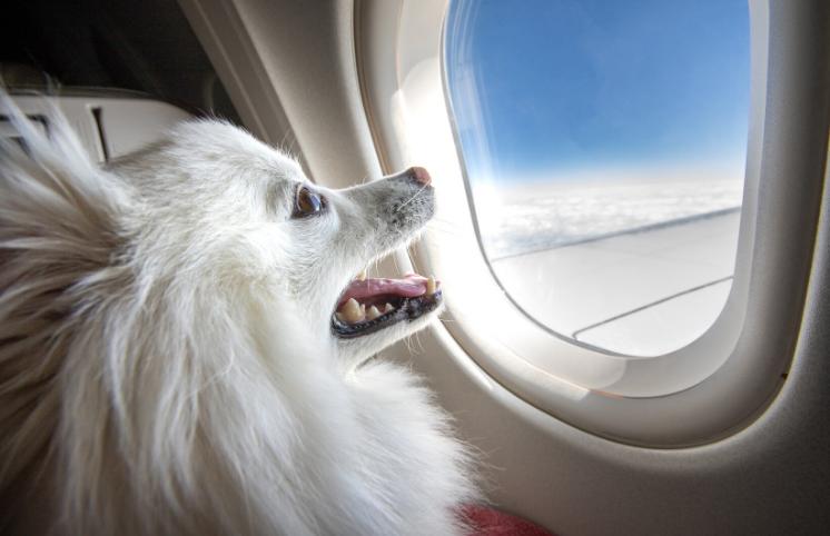 Como levar seu cachorro para Portugal
